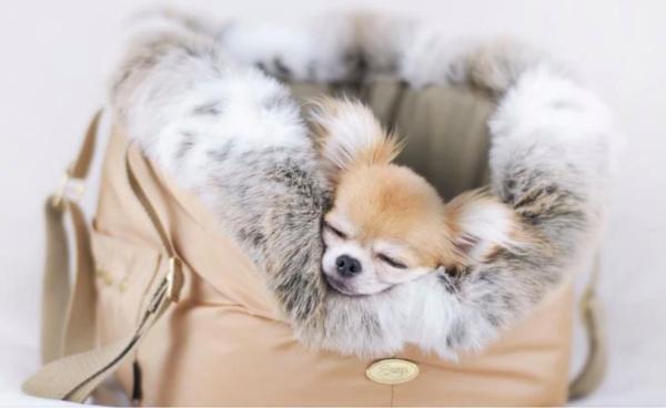 Hundetasche Cupido