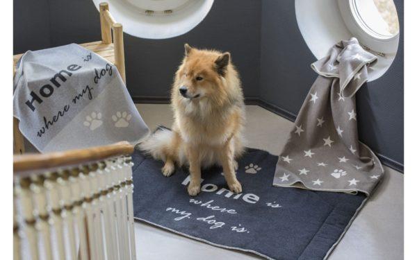 David Fussenegger Hundematte